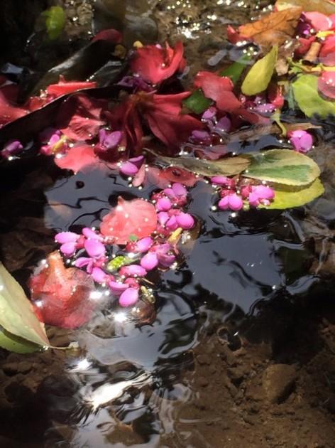 谷川沿いに咲いている花びらが次々に流れて来ます。