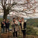 11/23農家体験イベント 干し柿作りのいちにち