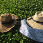 千代乃園のお茶作り 肥料について